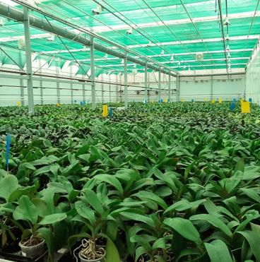 Orchidea farm